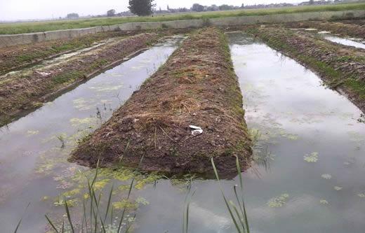 水蛭养殖 繁殖池