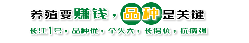 雷竞技电竞雷竞技newbee官网赚钱,品质是关键!